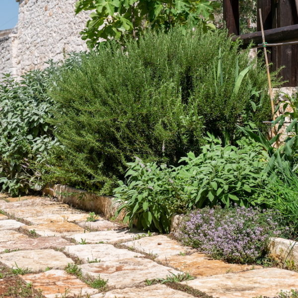 Trulli Oasi Fiorita L'Oasi - giardino aromi