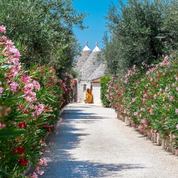 viale-ingresso-trulli-oasi-fiorita